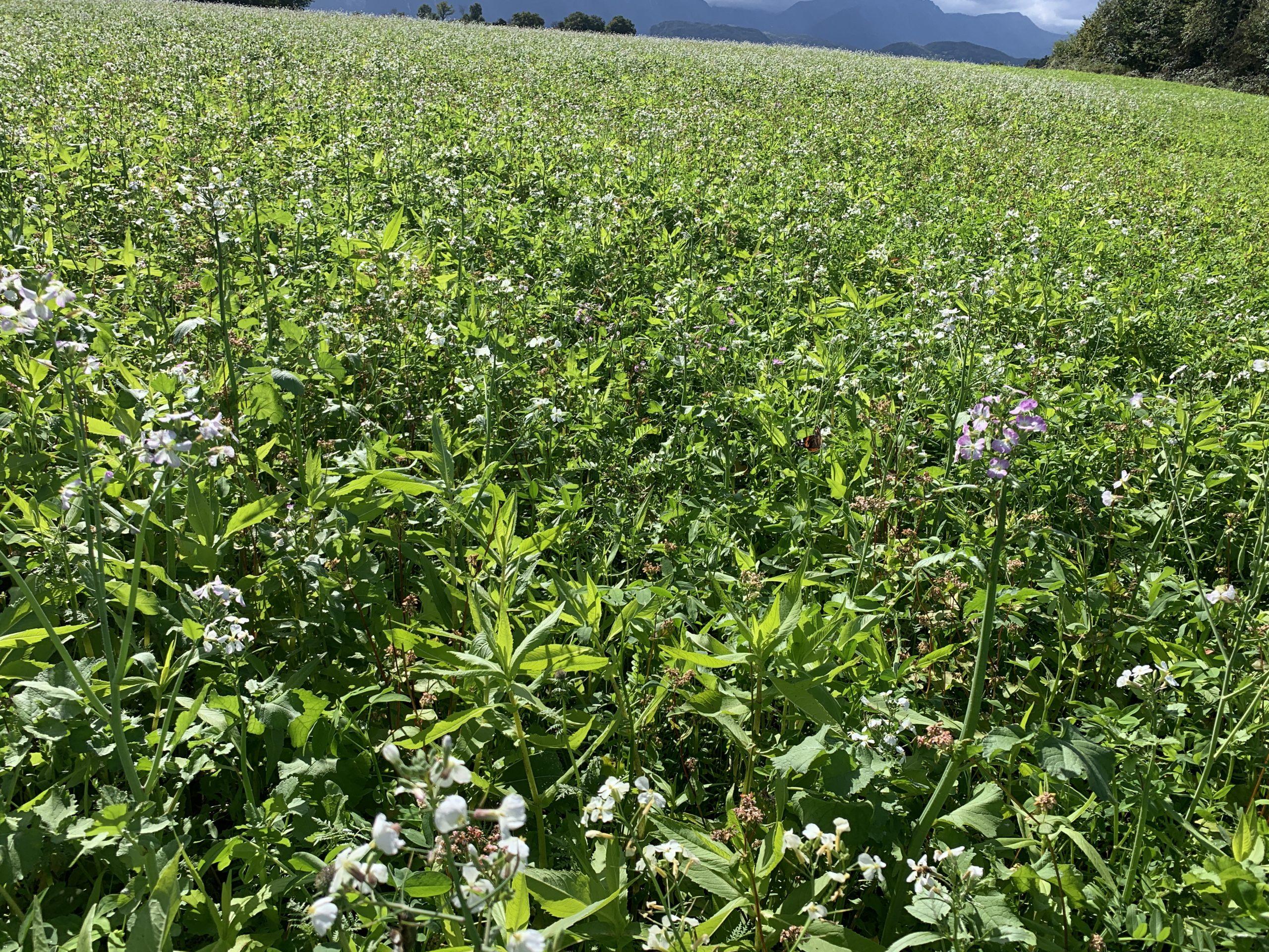 You are currently viewing Agrarexperte Ströbel: Biolandbau ist ökologisch nicht von Vorteil