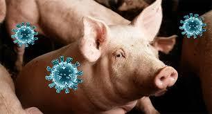 Österreich: Kammervertreter fordern Hilfe für Schweinehalter