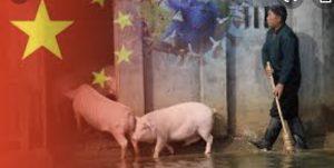 China: Schweinefleischproduktion 2020 nur moderat gesunken