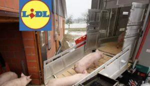 Lidl hält Preise für Schlachter seit Monaten stabil, Bauern gehen leer aus