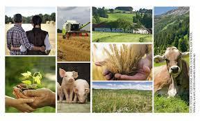 Österreicher haben hohe Meinung von Landwirtschaft