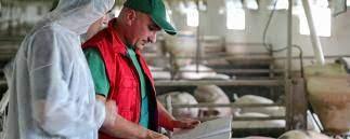 Schweinepreise: Markt schon wieder auf der Kippe?