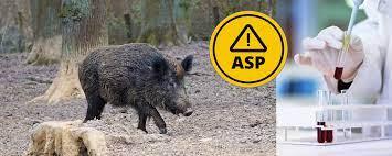 Read more about the article USA: Fortschritte beim ASP-Impfstoff für Wildschweine