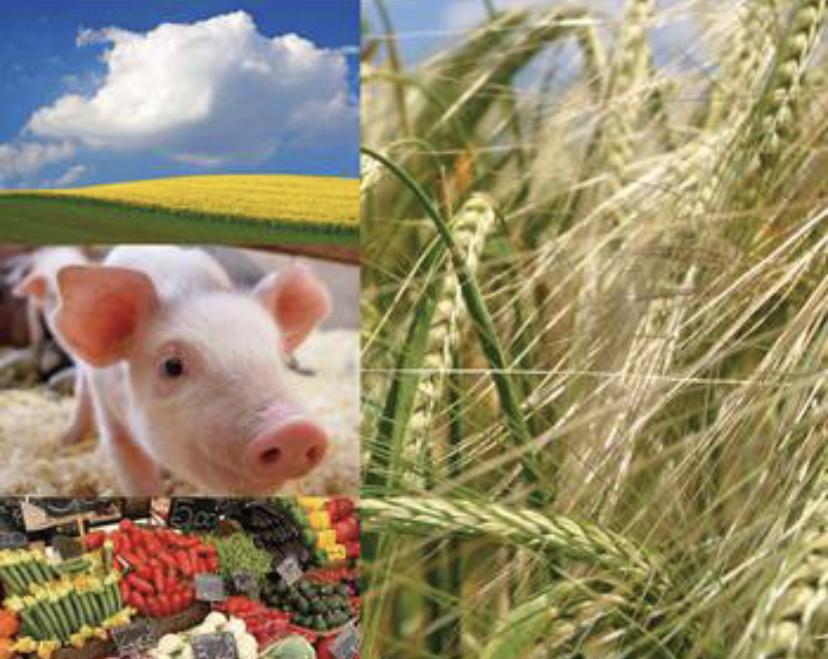 You are currently viewing In Deutschland mehr kritische Berichte zur Agrar- und Ernährungswirtschaft