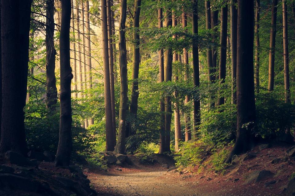 You are currently viewing Kommt unser Diesel zukünftig aus dem Wald?