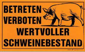 Read more about the article Schweinebestände in Österreich wachsen