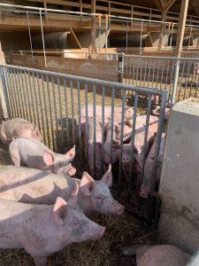 Read more about the article Neues Tierwohlkonzept in Belgien gestartet