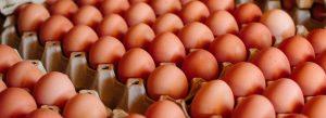 Read more about the article Der bodenlose Fall der Eierbauern
